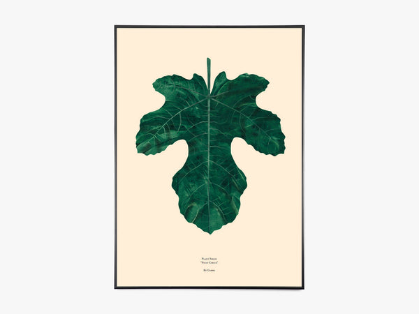 FICUS CARICA – FIG LEAF fra By Garmi