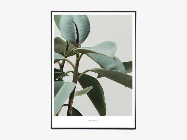 Ficus Elastica - Beautiful World Plakat fra Beautiful World