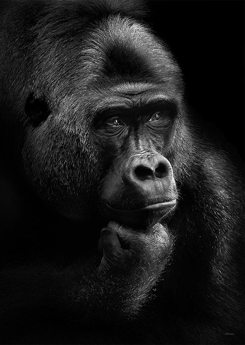 Gorilla Thoughts fra ChiCura