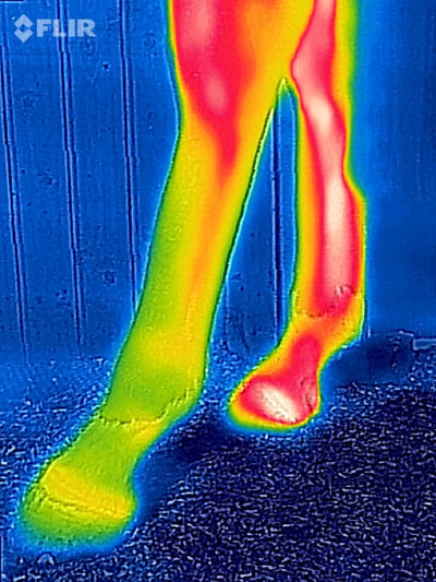 Will thermal imaging gain greater traction in veterinary practice?