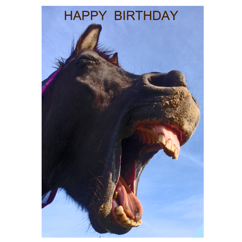 All Horsey Birthday Card - Happy Horse - All Horsey Gifts