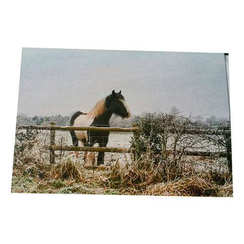Coloured Cob in the winter Blank Card - All Horsey Gifts