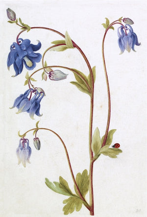 Blue French Botanical - Amy Berry Home