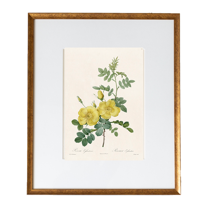 Yellow Redoute Roses - Amy Berry Home