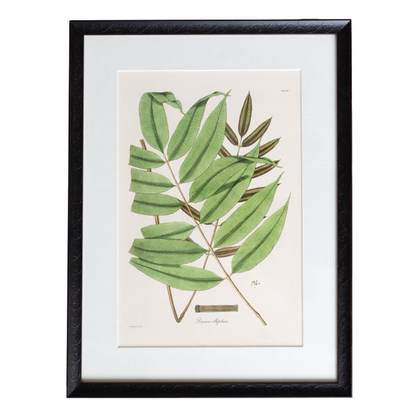 Hooker Fern 3 with Antiqued Black Matted Frame