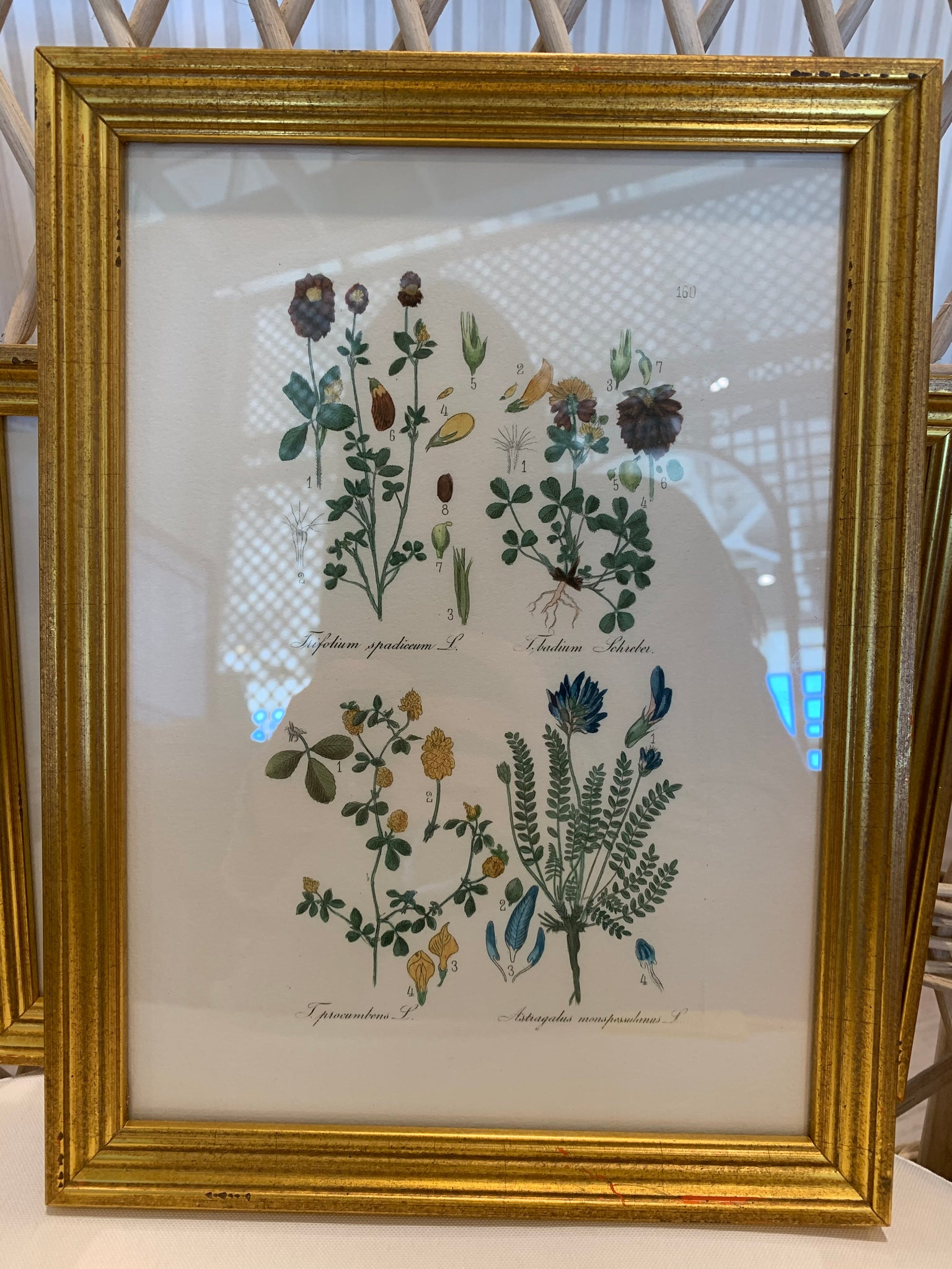 Little Flowers in Bright Gold Frame - Amy Berry Home