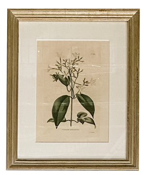Small Antique Botanicals - Amy Berry Home