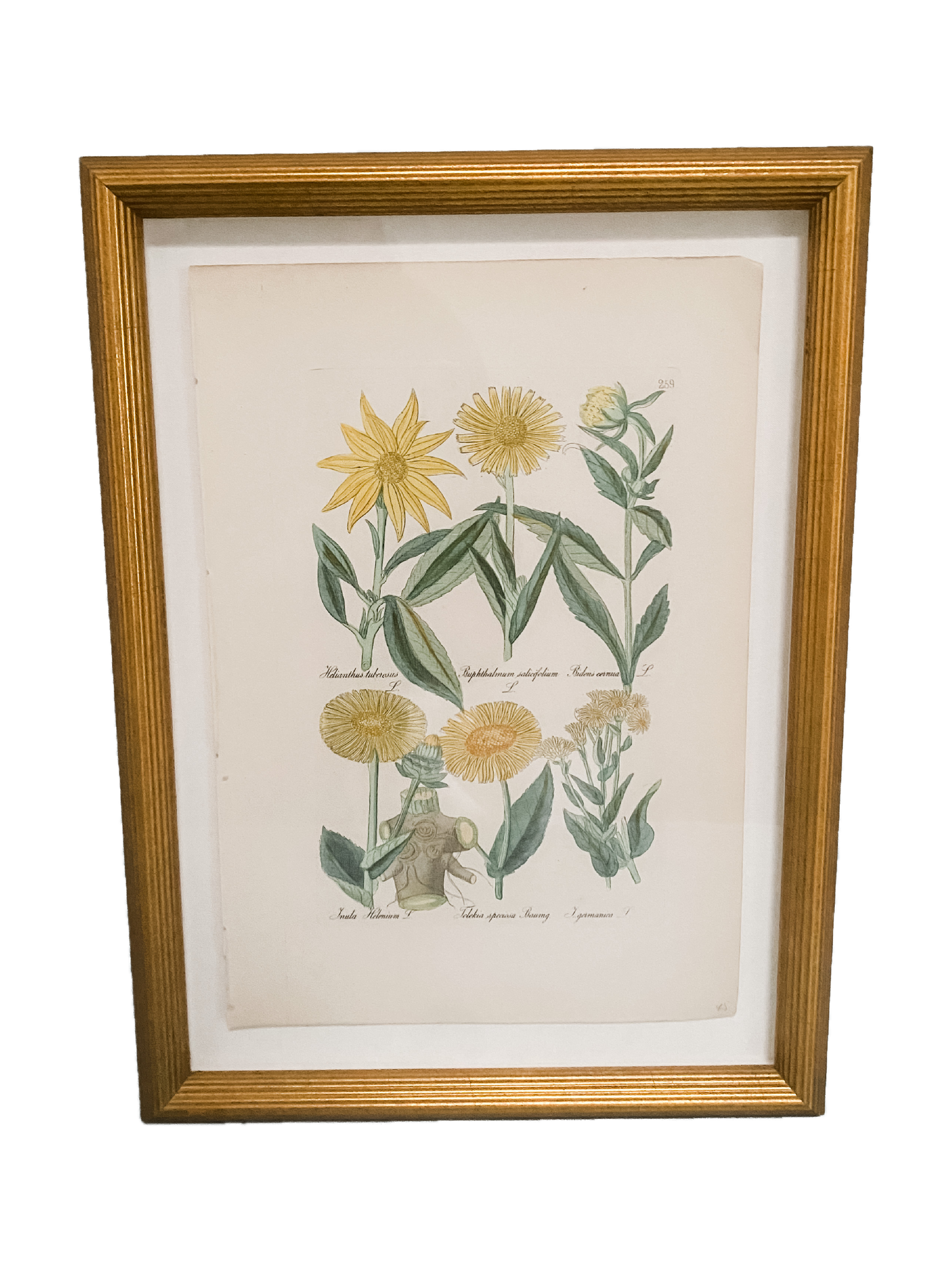 Little Botanicals in Gold - Amy Berry Home