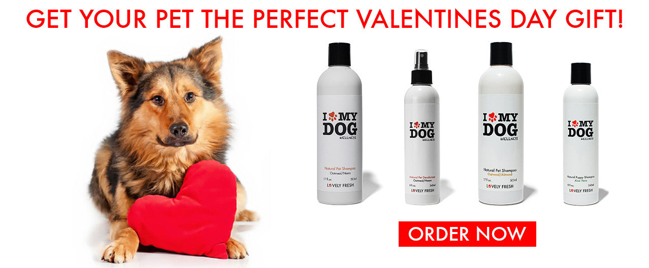Best Natural Dog Grooming Products