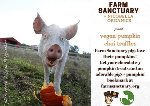 pigs and pumpkin farm sanctuary and nicobella organics