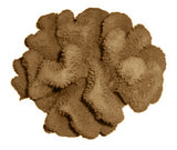 #121 Large Cauliflower Acropora aquarium decoration
