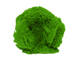 #712 Small Ball Lettuce