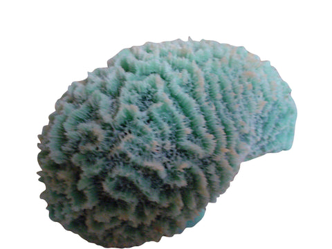 artificial corals medium closed brain coral