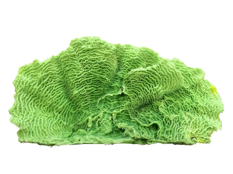 #727 XL Lettuce Plate Coral