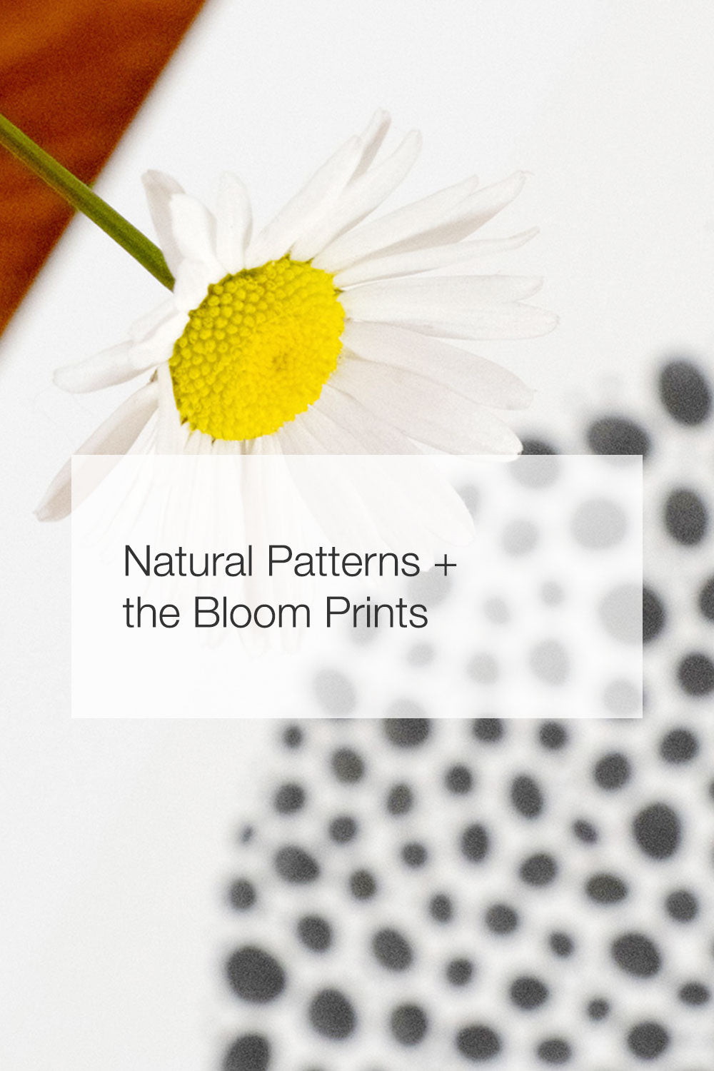 A daisy and a limited edition print of Bloom Graphic.