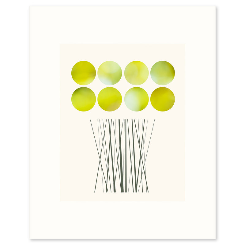 A limited edition fine art print based on a glorious bunch of Daffodils by Janet Taylor | Household Art..