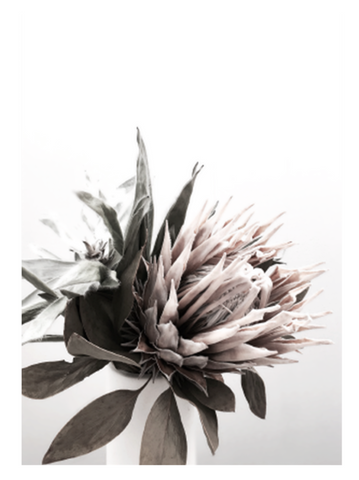 The Styler Protea art print