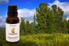 Cedarwood Essential Oil - 100% Pure