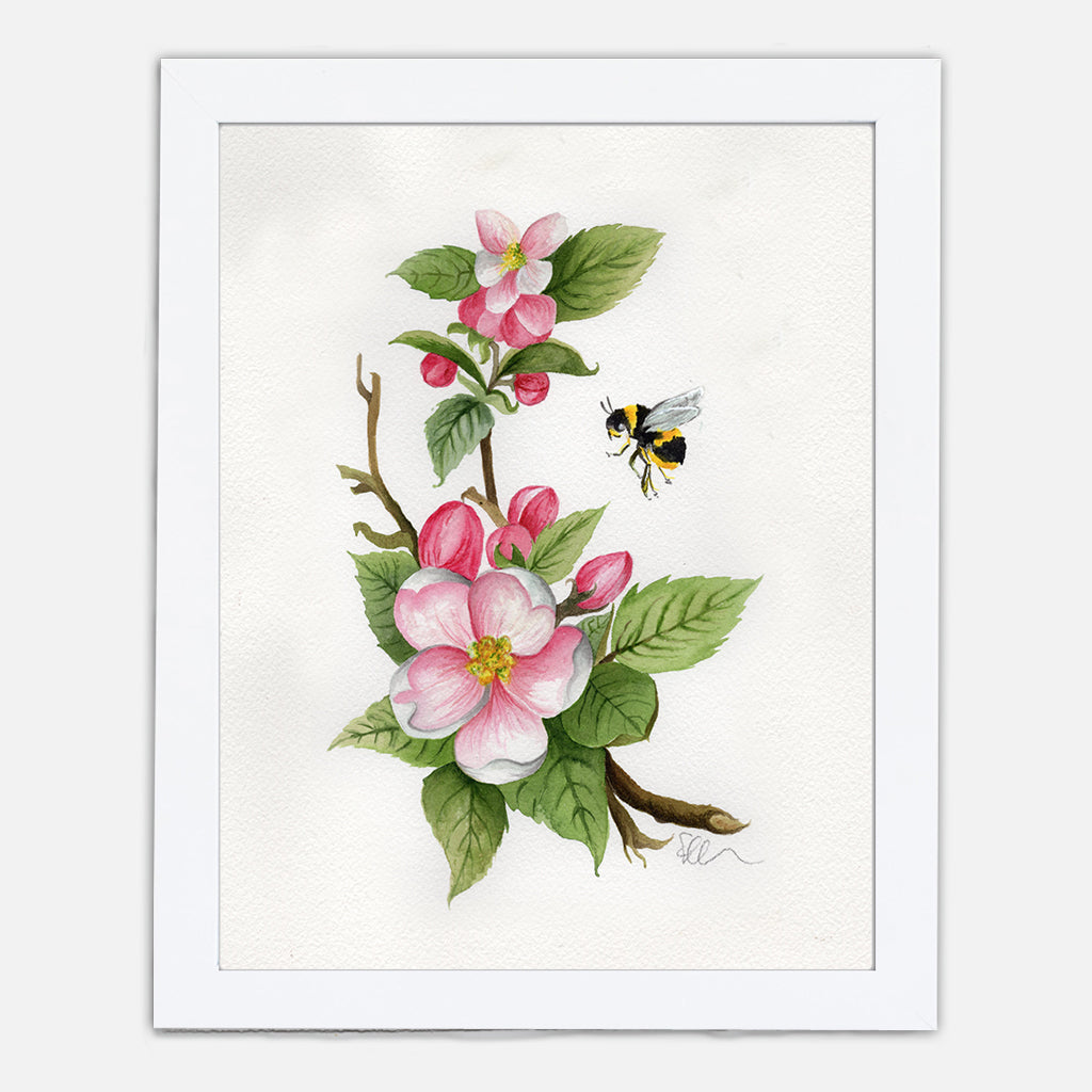 Arkansas Apple Blossom Art Print