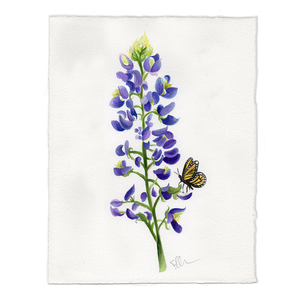 Texas Bluebonnet Original