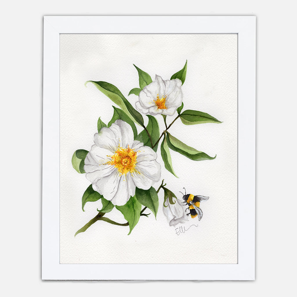 Georgia Cherokee Rose Art Print