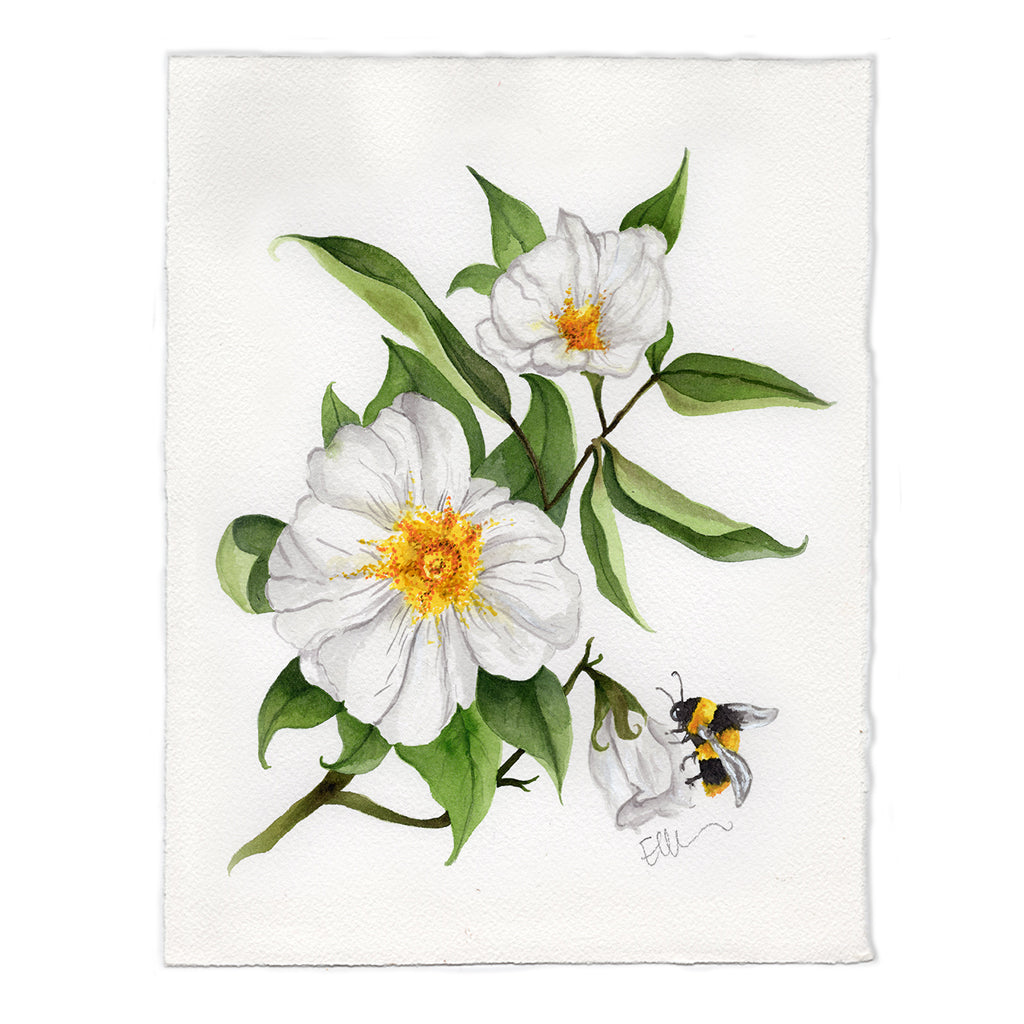 Georgia Cherokee Rose Original