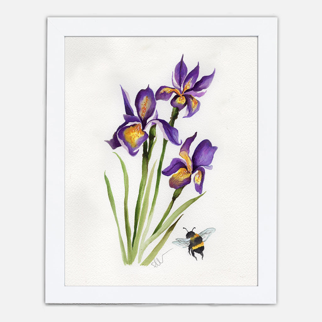 Louisiana Iris Art Print