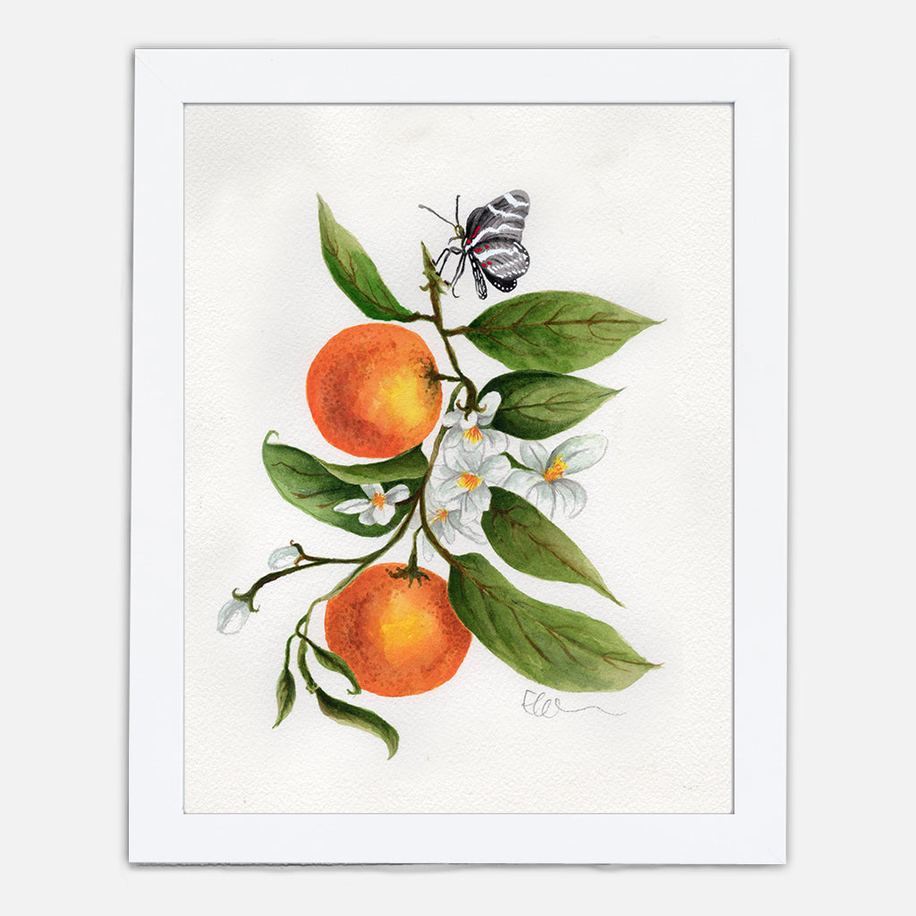Florida Orange Blossom Art Print
