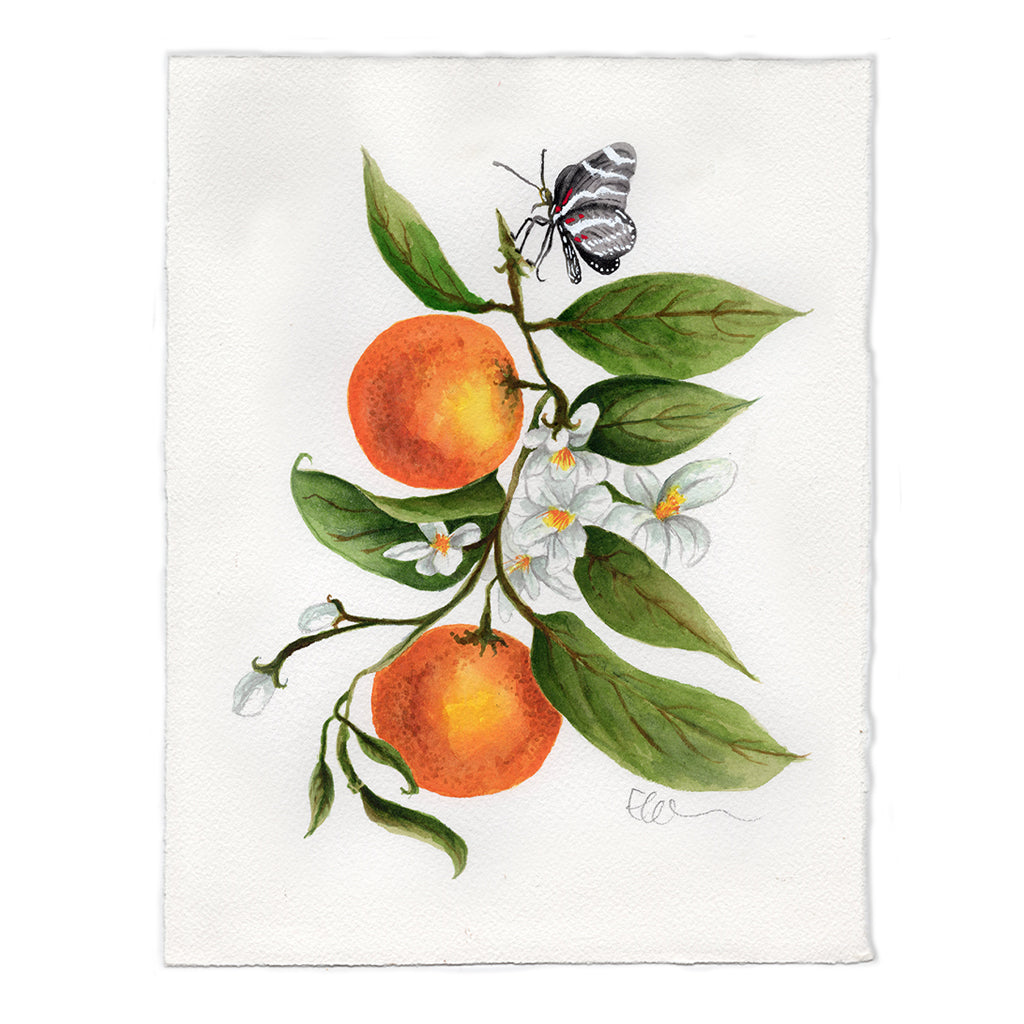 Florida Orange Blossom Original