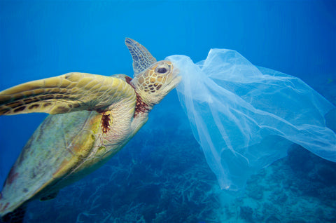 turtle eating a plastic carrier bag