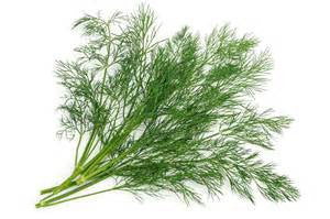 Dill Olive Oil