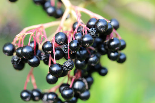 Elderberry Dark Balsamic
