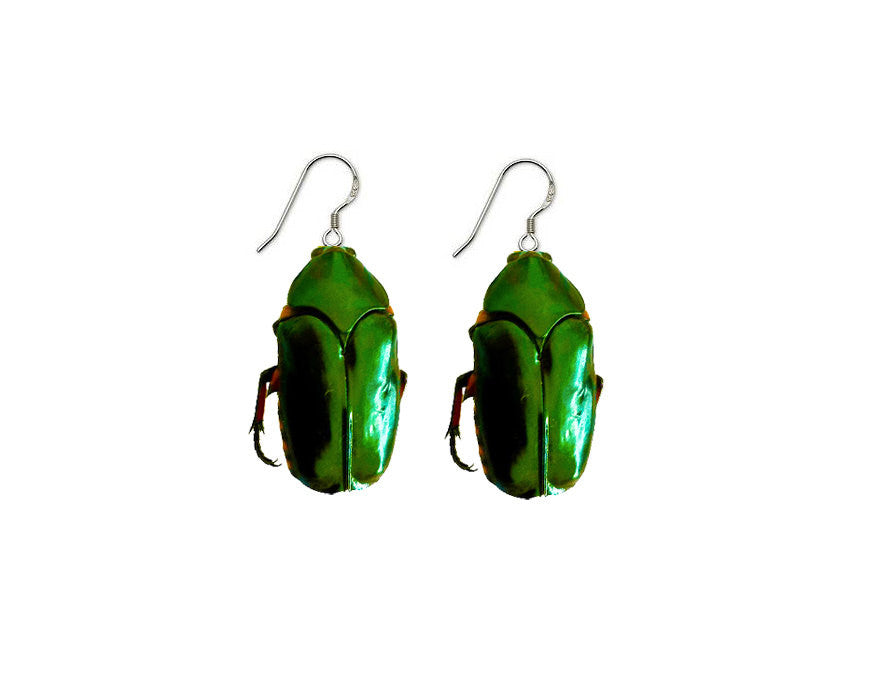 Real Green Beetle Earrings Moonrise Kingdom - Wes-Anderson.com  - 1