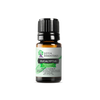 Eucalyptus Essential Oil | 100% Pure Essential Oil - JOYA ESSENTIALS