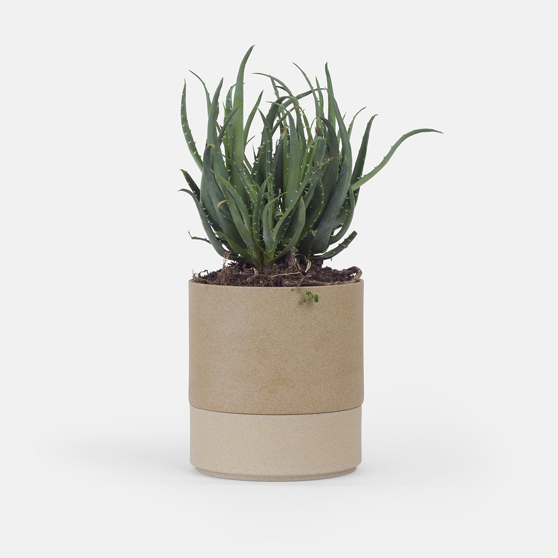 Small Beige Planter