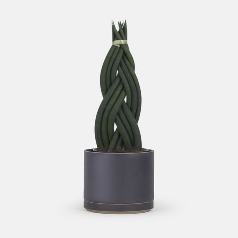 Small Black Planter