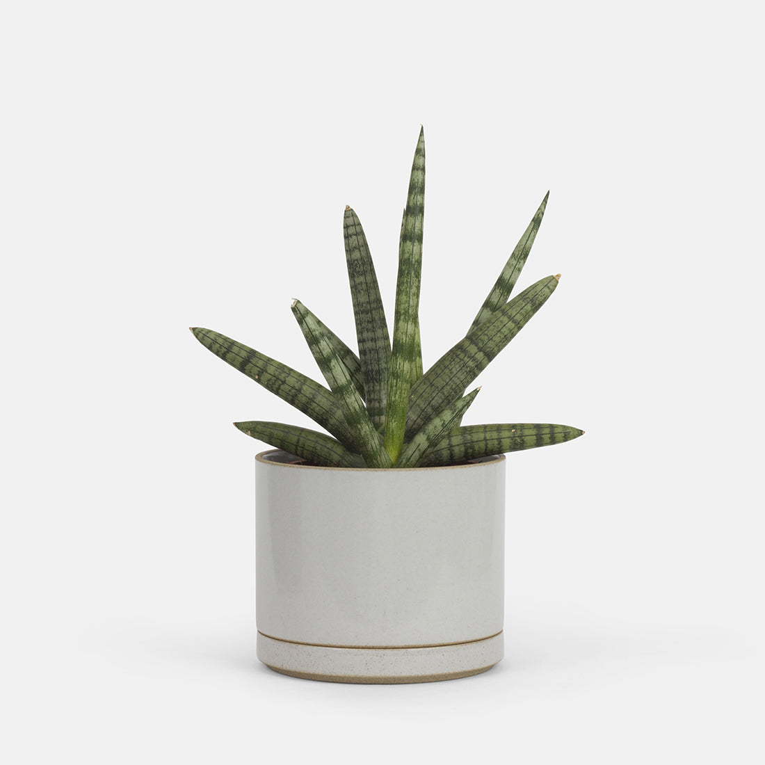 Small Grey Planter