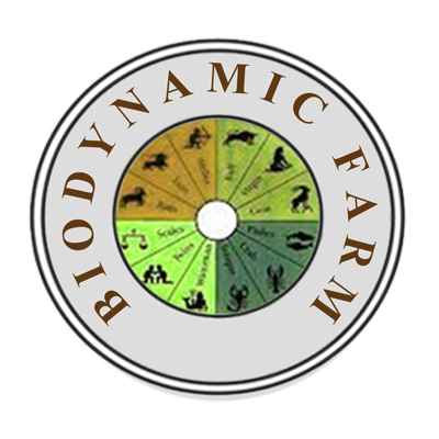 Organic Cotton Girl's Dress