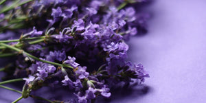 Catalina Aromatherapy Lavender Banner