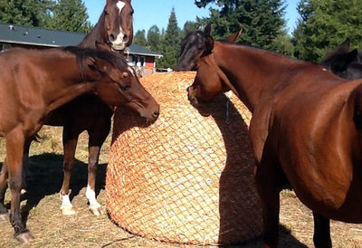 Horses on a Round Bale Slow Feeder