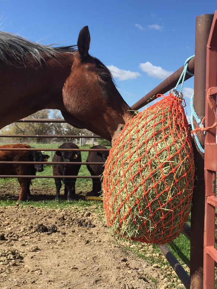 Horse Trailer Net - Large