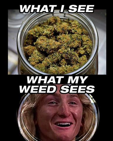 fire weed memes green glass meme review what my weed sees funny