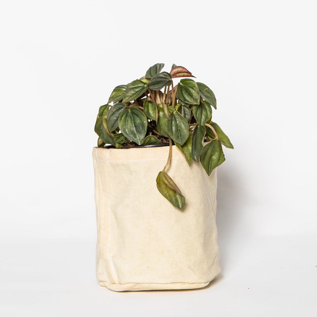 Small Waxed Canvas Pot Cover, Off White