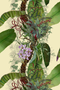 tropical tropical superwide wallpaper, timorous beasties, wallpaper, - adorn.house