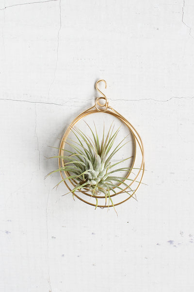 Small Brass Hanger + Plant
