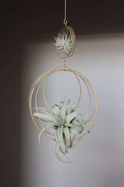 Xeographica Tillandsia + 2-Tiered Ornament