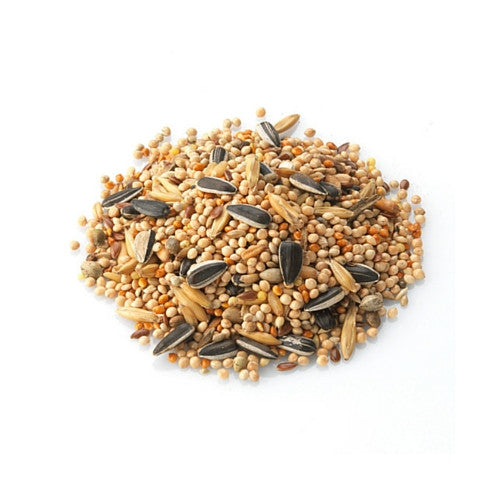 Savory Seeds : 50 gms - HungrySquirrel