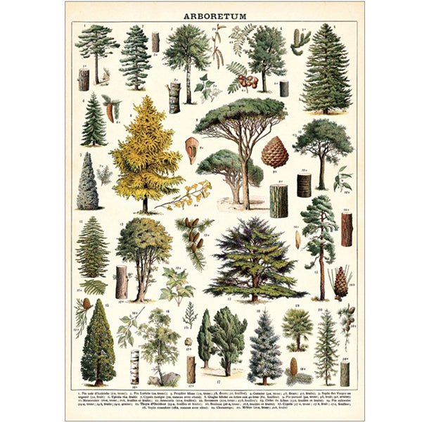 Arboretum Wrapping Paper / Poster