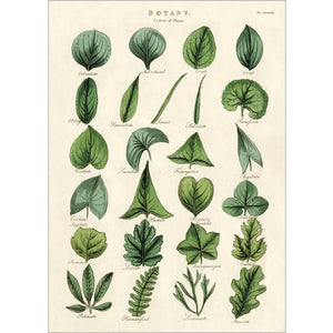Botany Leaves Wrapping Paper / Poster