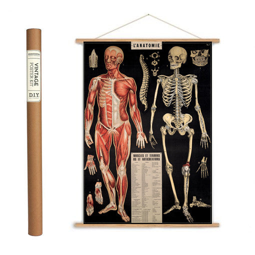 L'Anatomie Wrapping Paper / Poster